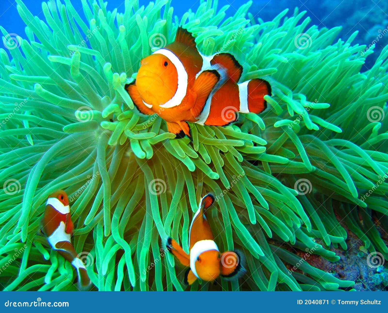 Gevonden Nemo