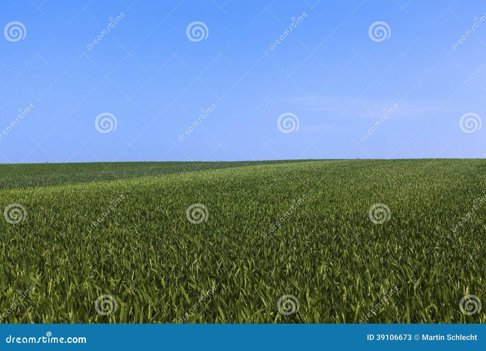 Gewassengebied
