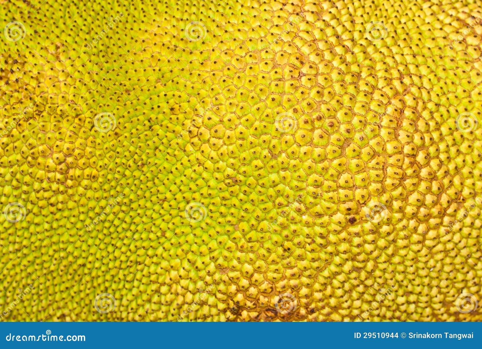 Geweven Huid van een hefboom-Fruit