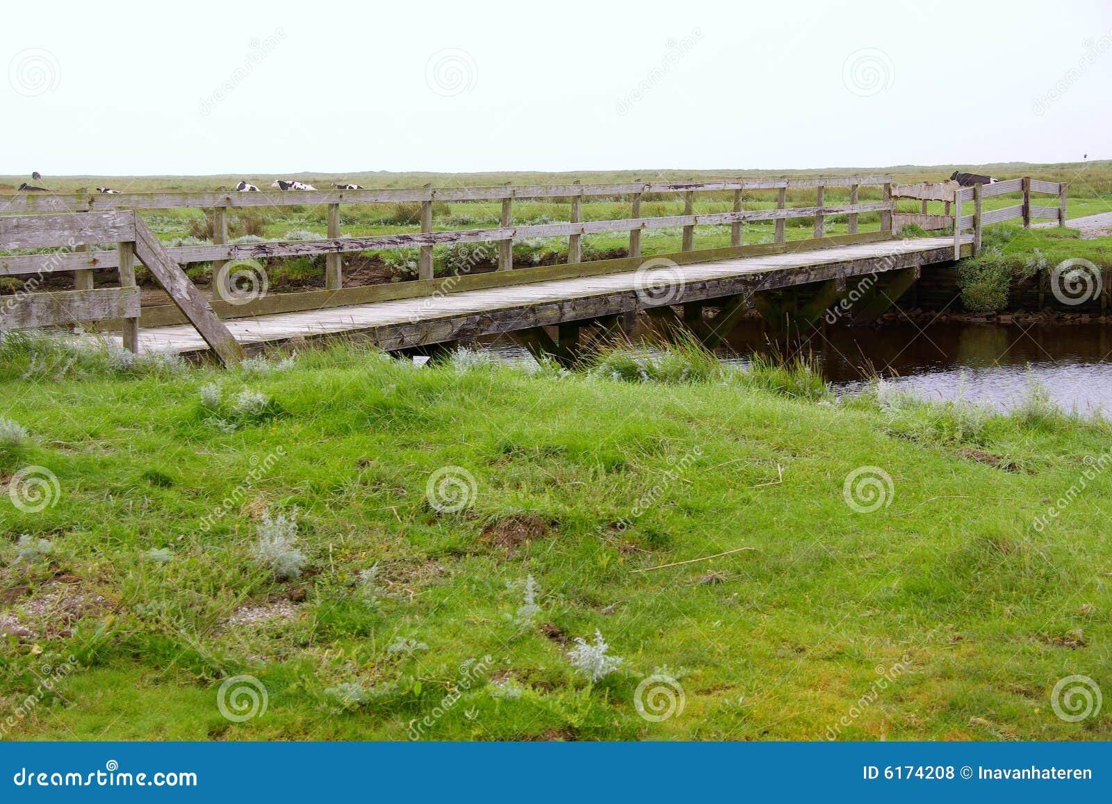 Gezeiten- Sumpf