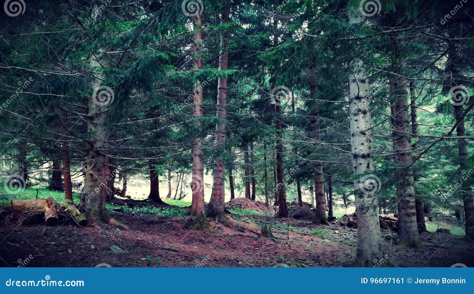 Gezierter Wald