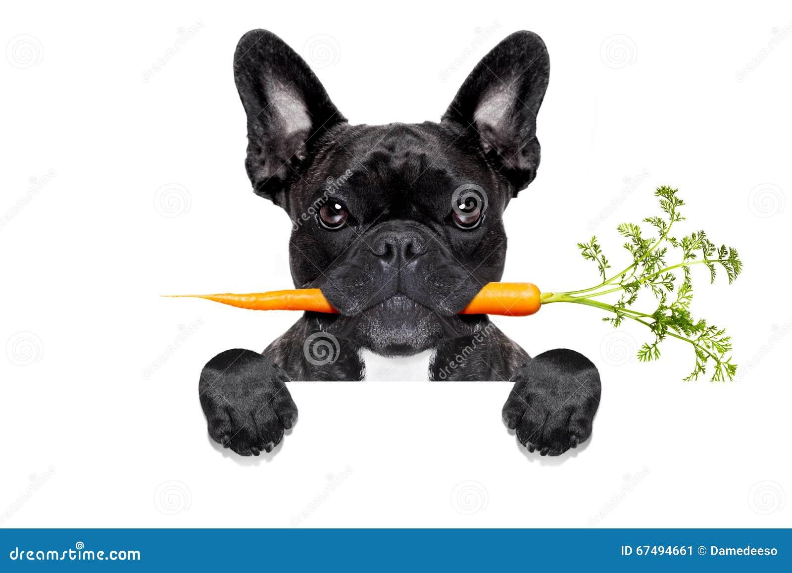 Gezonde voedselhond