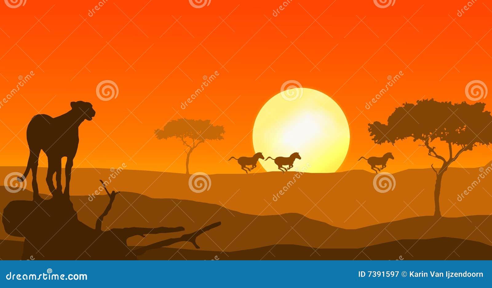 Ghepardo e zebra nel tramonto