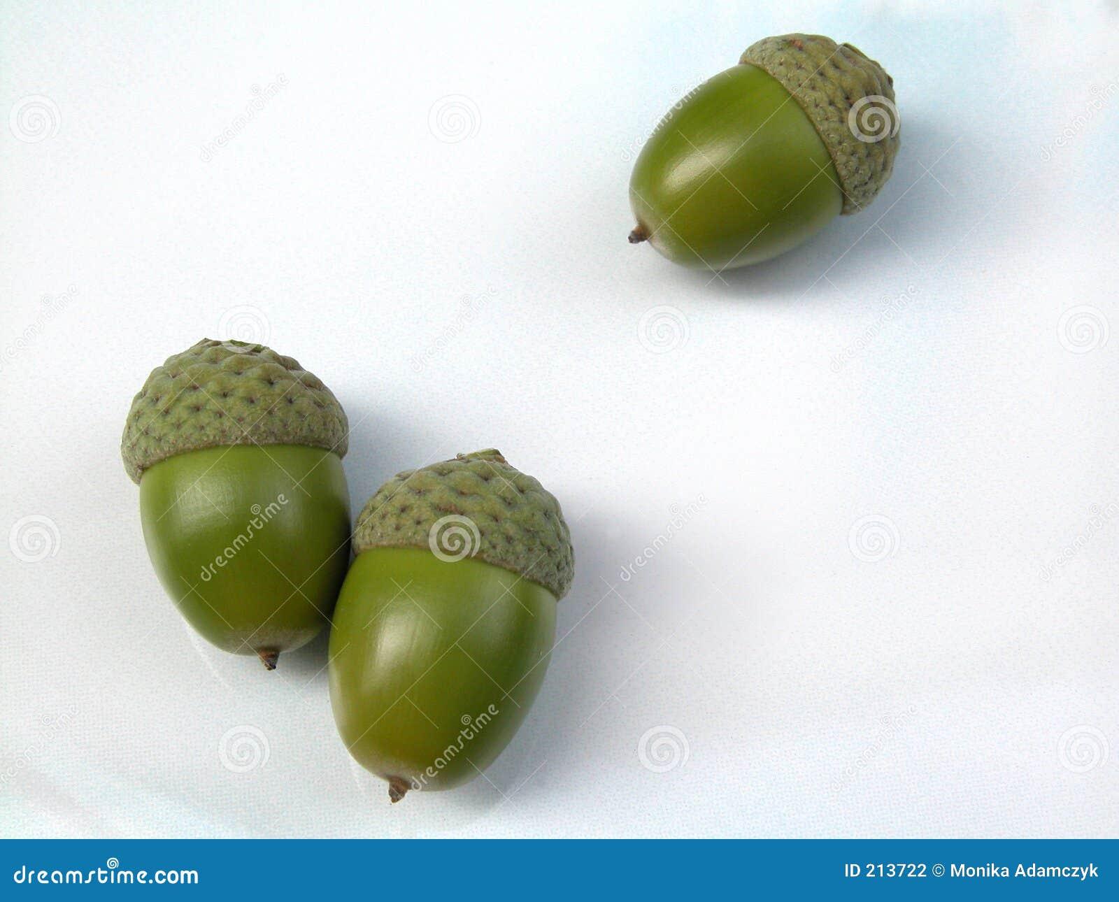 Download Ghiande fotografia stock. Immagine di composizione, piante - 213722
