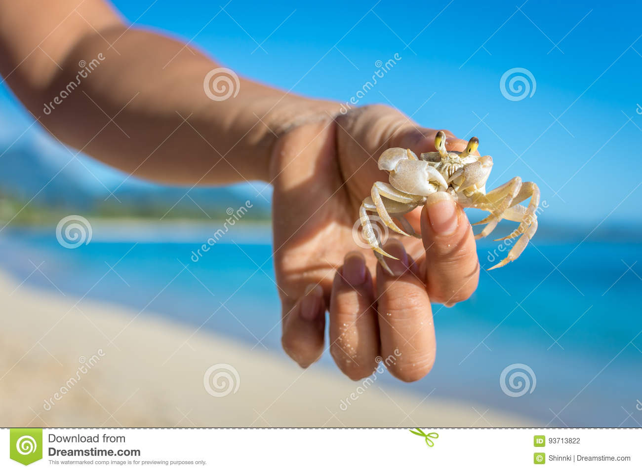 Ghost Crab With A Funny Face Stock Photo - Image of beach