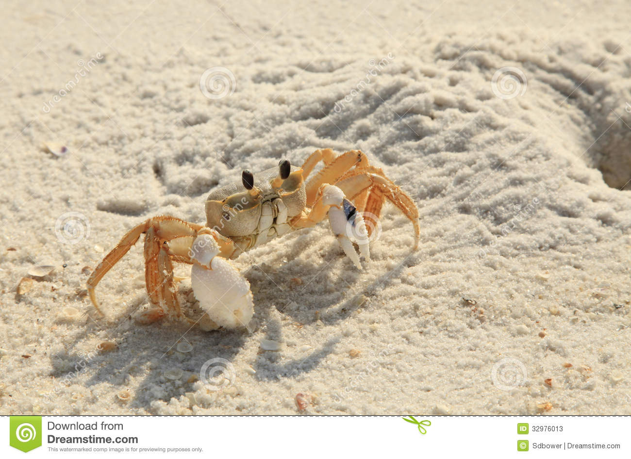 Tropical Island Beach Ambience Sound: Ghost Crab Ventures Out Of His Hole On White Sand Florida