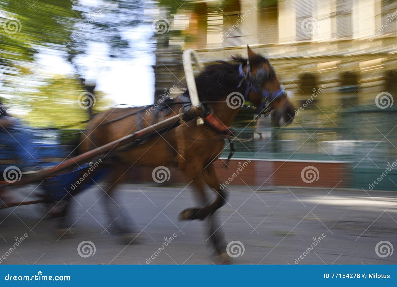 Ghost fonctionnant aiment le cheval à la rue d île de sacoche