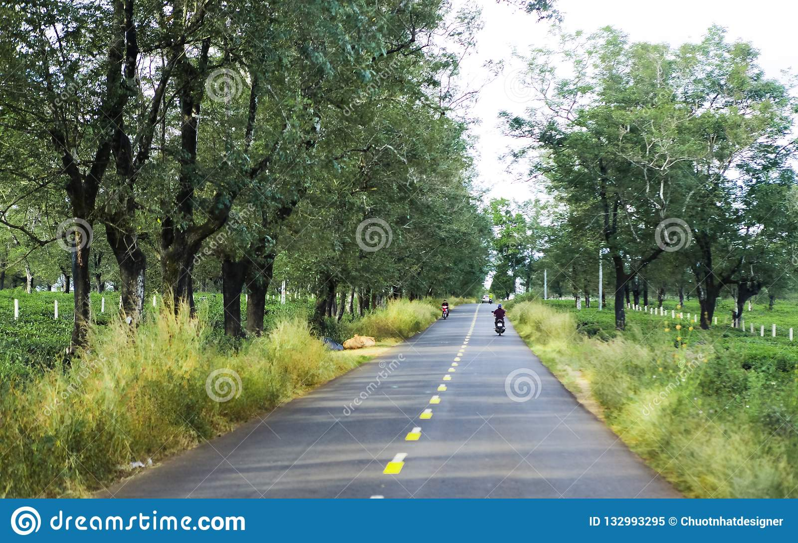 Gia Lai, Vietnam - 24 novembre 2018 : La belle route traverse la ferme Gia Lai Province, Vietnam de thé