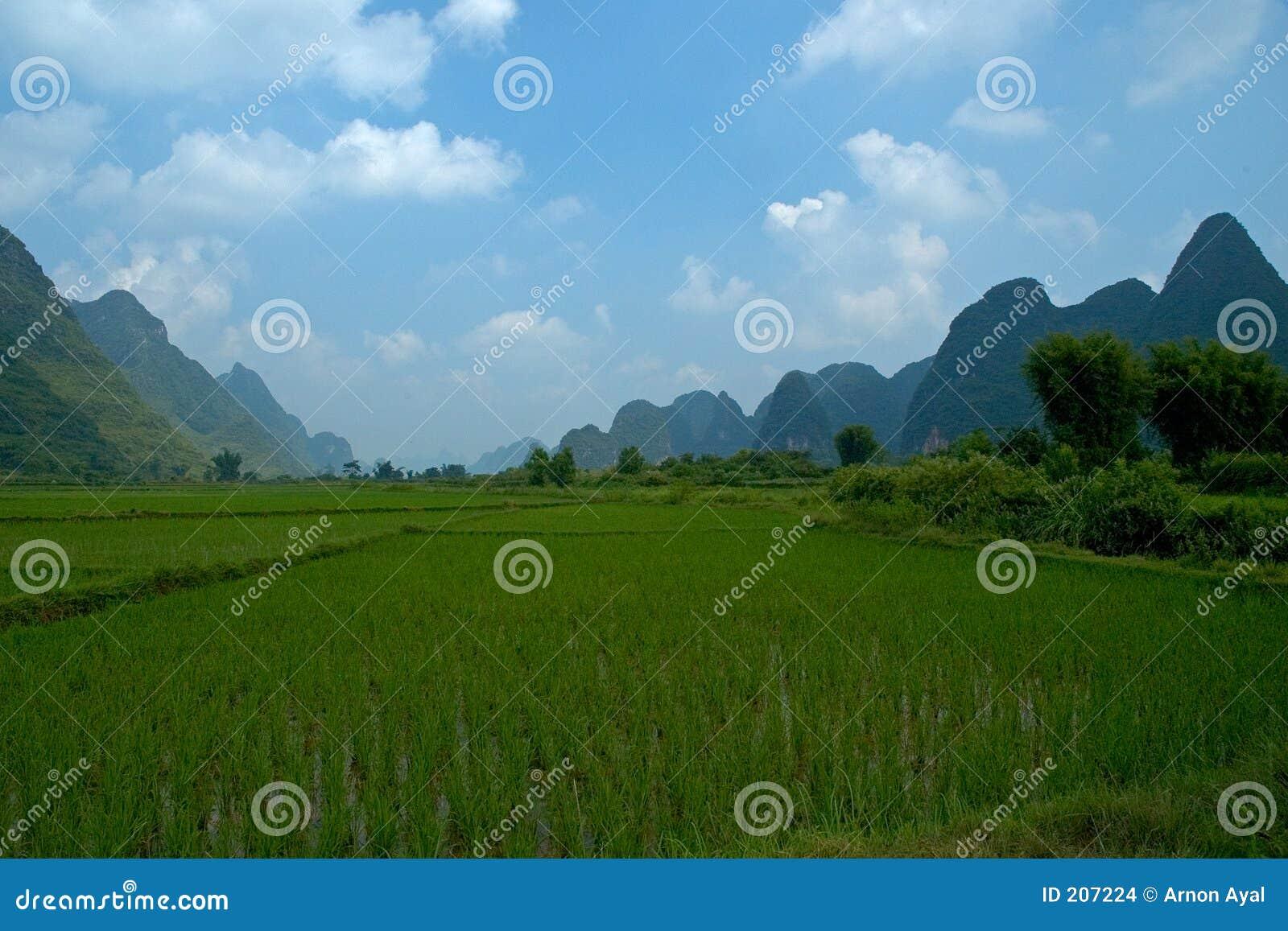 Giacimenti del riso