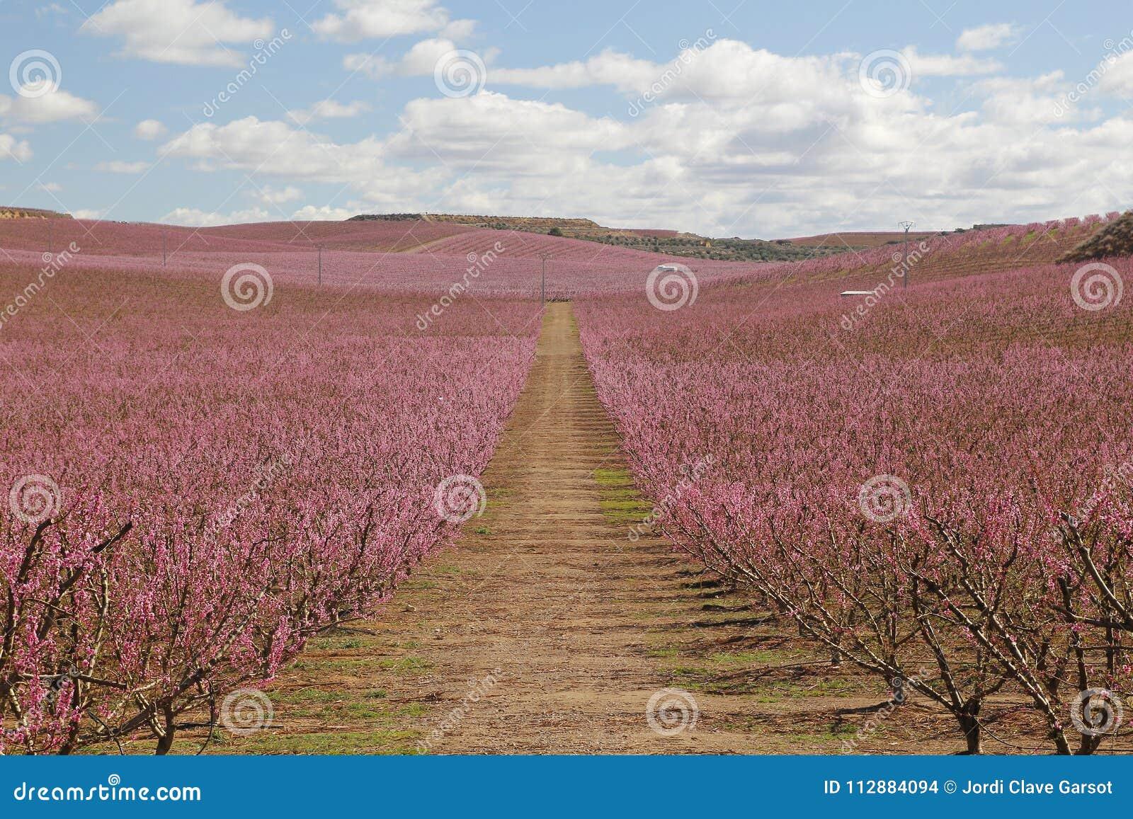 Giacimenti della pesca nel rosa