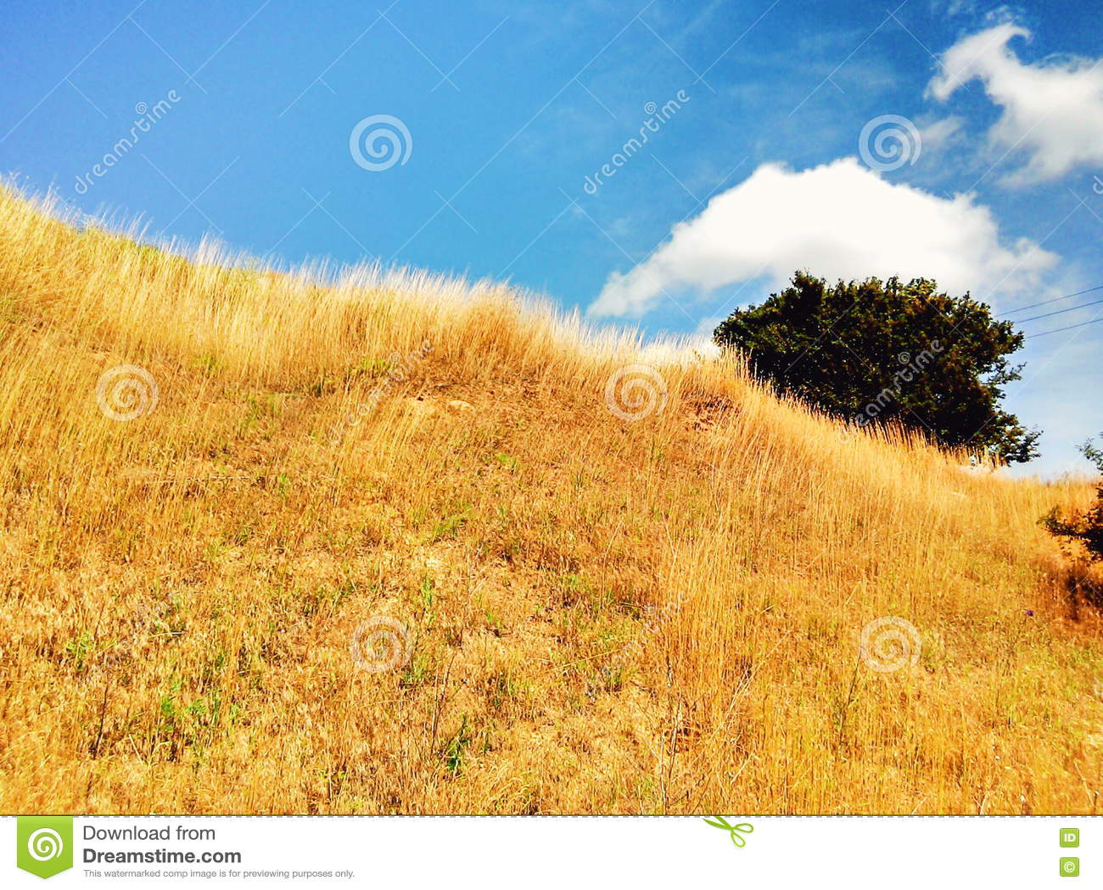 Giacimento dell oro e del cielo blu