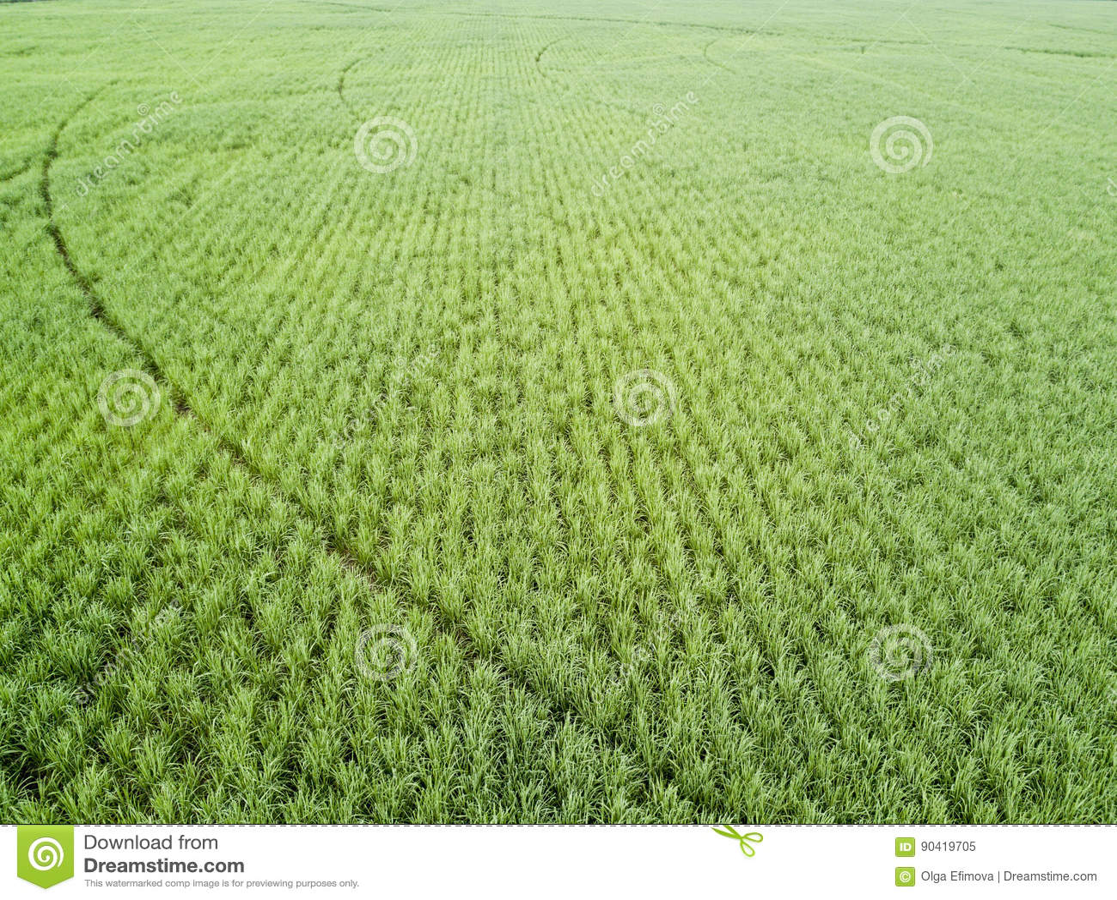 Giacimento della canna da zucchero di vista aerea