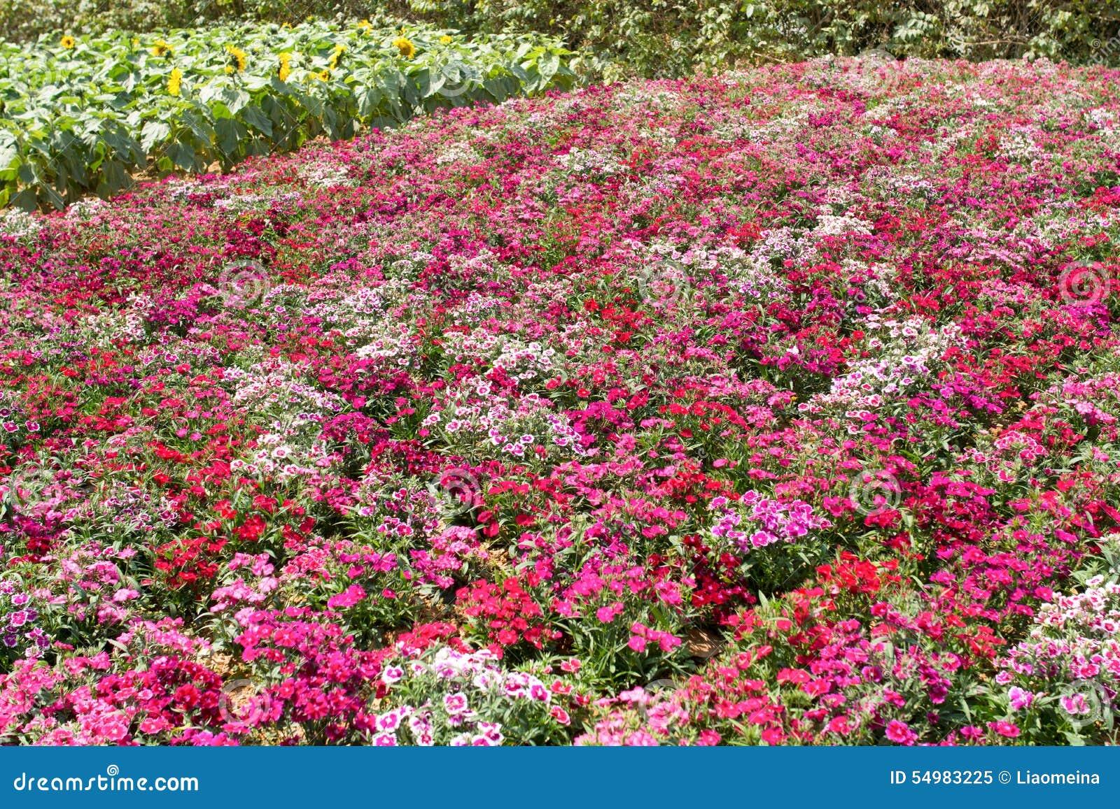 Giacimento di fiore