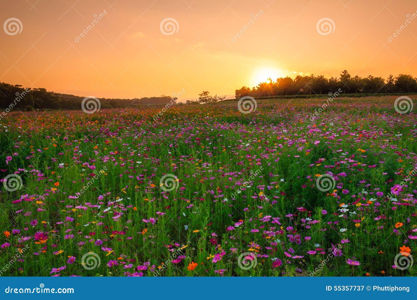 Giacimento rosa dell universo nel tramonto