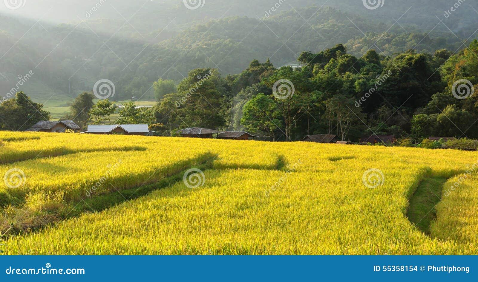 Giacimento a terrazze Chiang Mai, Tailandia del riso