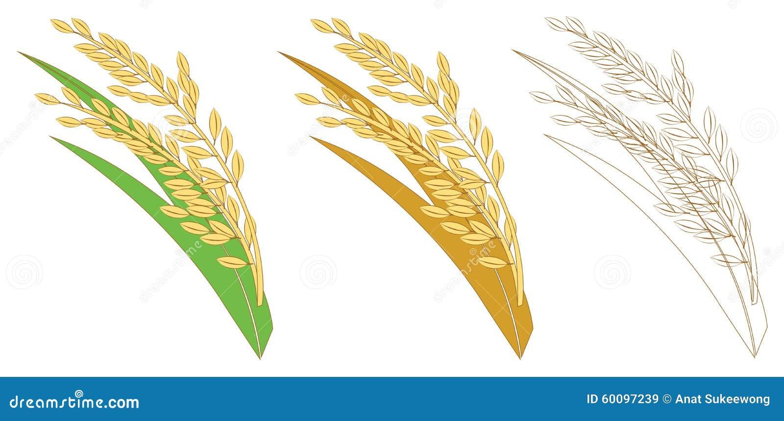 Giallo dell oro del riso