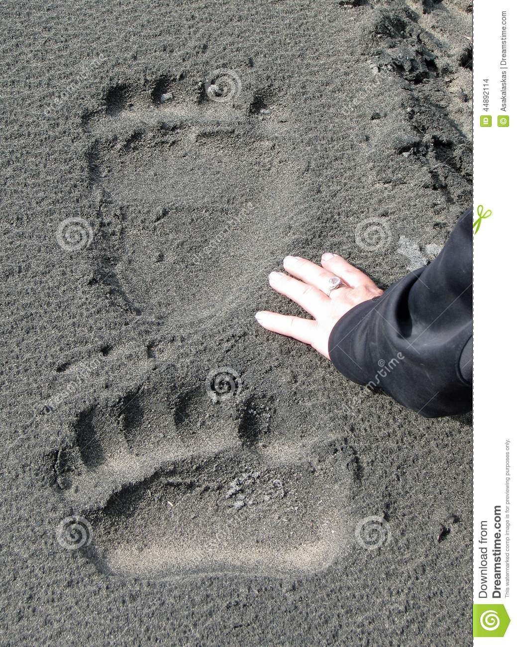 Giant Brown Bear Track...