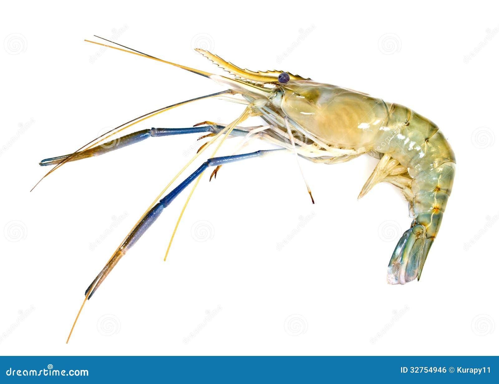 Giant freshwater prawn stock photo  Image of fresh, cooked - 32754946