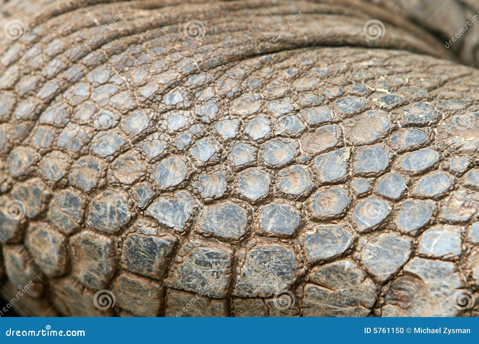 Giant Galapagos Tortoise Skin Stock Photo - Image: 5761150