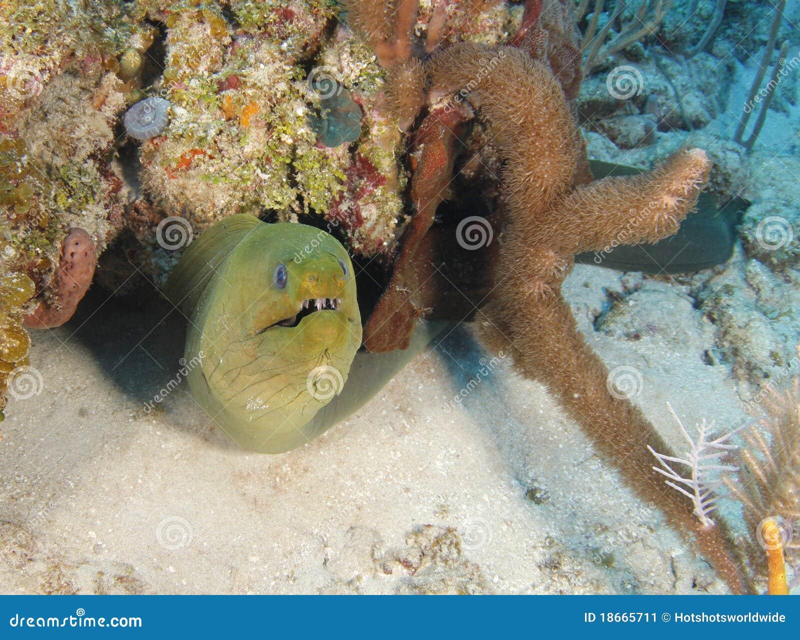 Giant underwater snake - photo#4