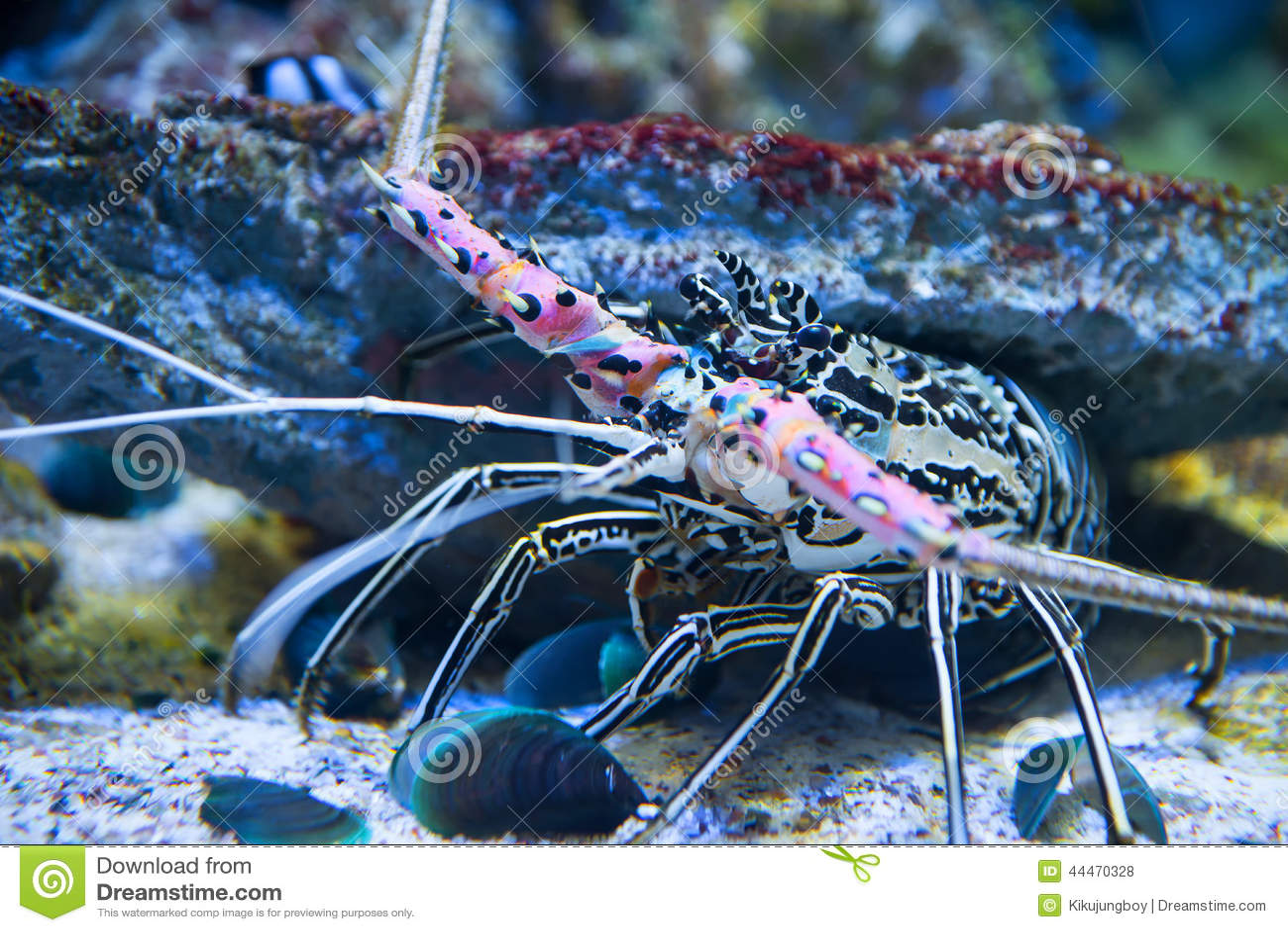 Lobster Underwater Giant Lobster, ...