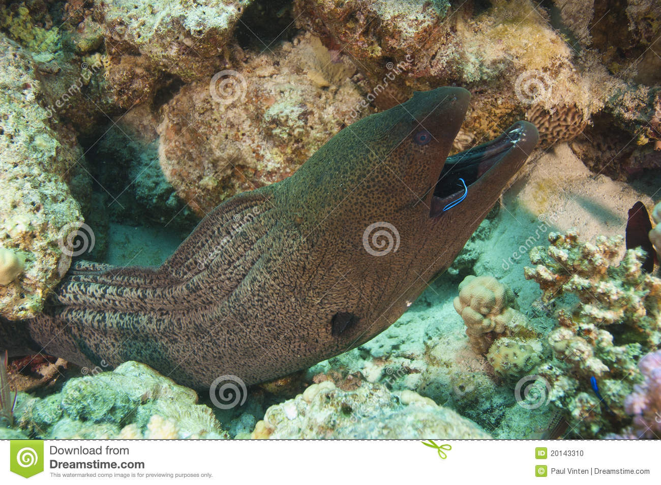 cleaner wrasse and reef fish relationship site