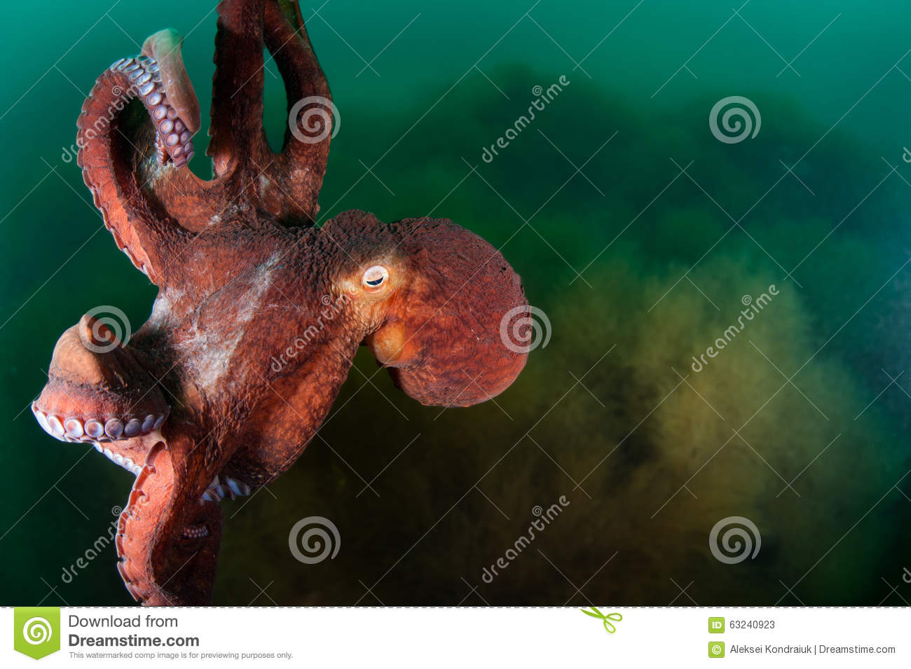 7x10 FT Octopus Vinyl Photography Background Backdrops,Giant Octopus with Long Legs Exotic Oceanic Animals Beast Wild Life Image Print Background for Selfie Birthday Party Pictures Photo Booth Shoot