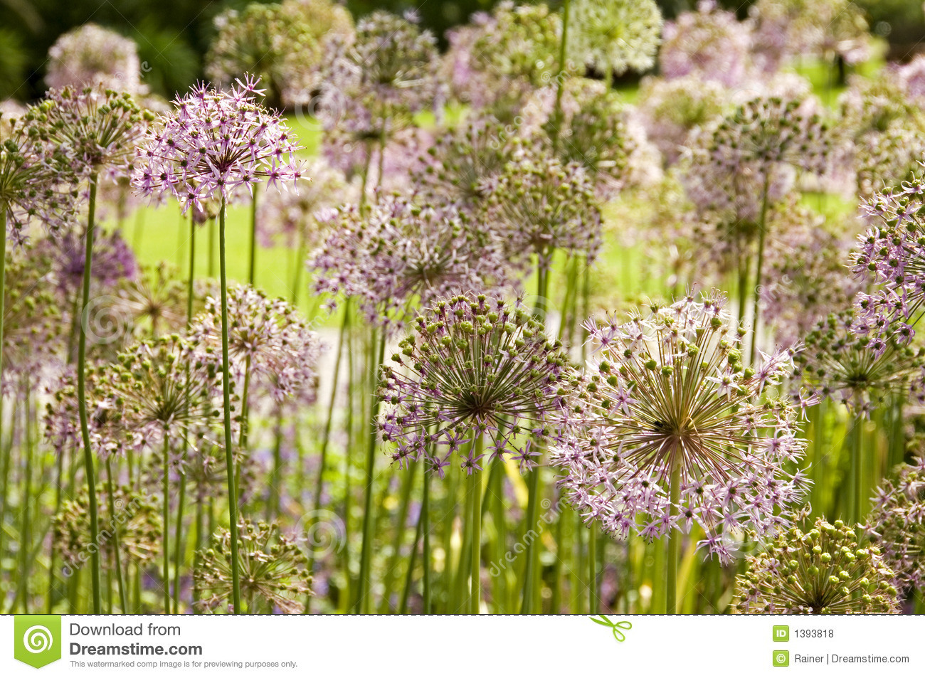 Giant ion Flowers Royalty Free Stock s Image