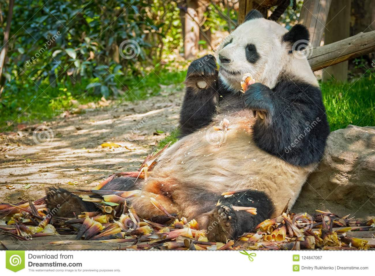 Giant Panda Bear In China Stock Image Image Of Panda 124847067