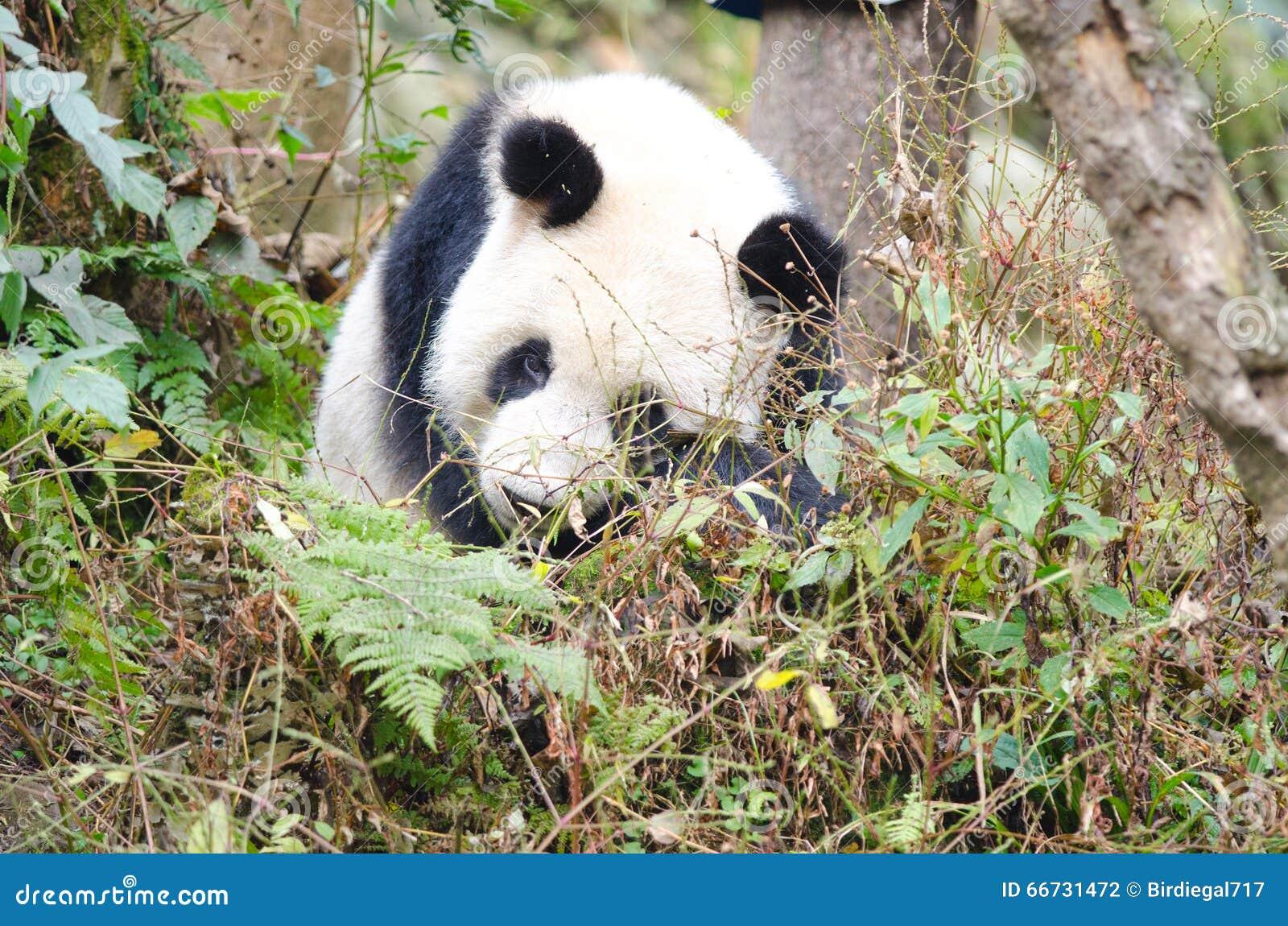 wwf panda forest - photo #17