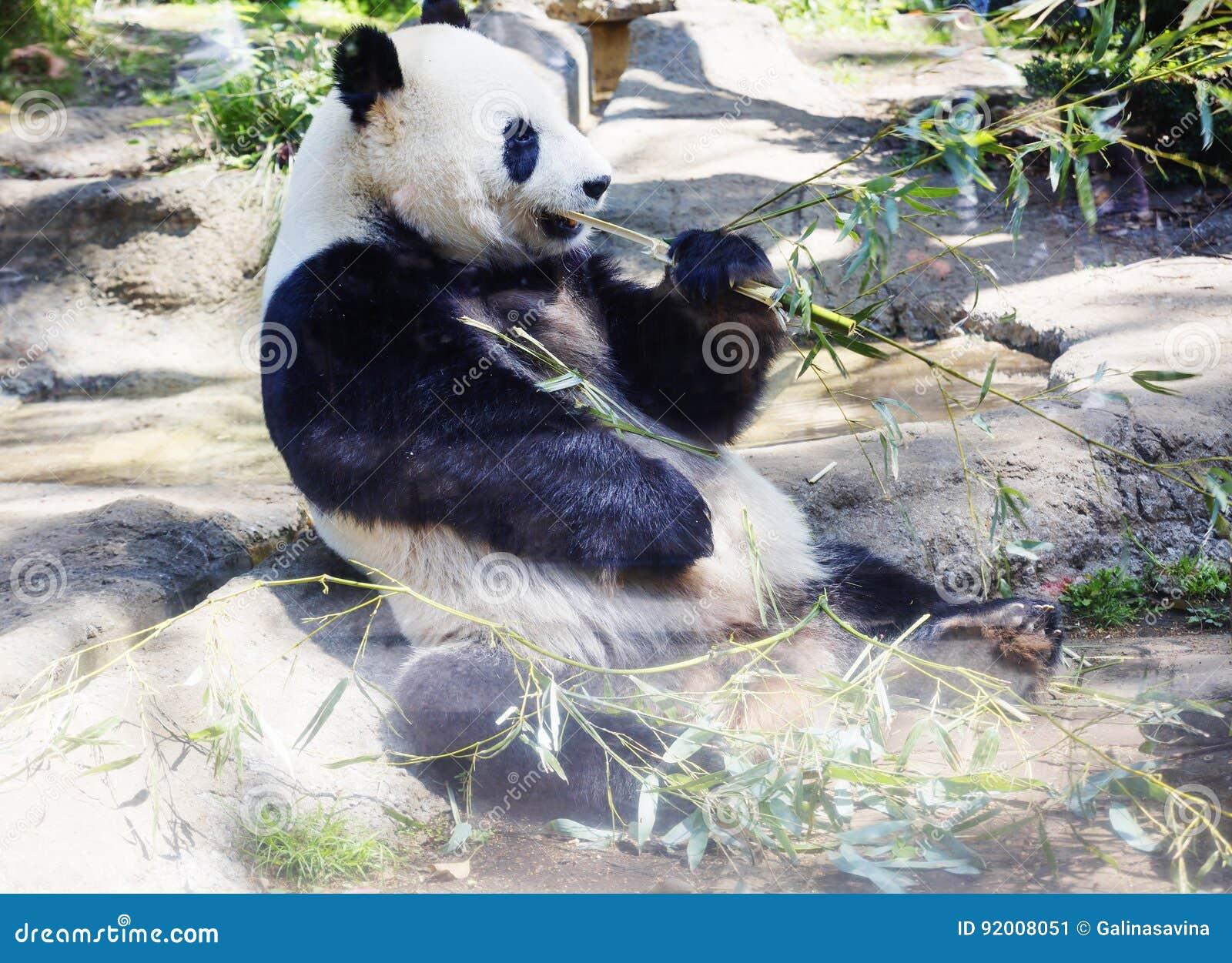 Big Panda, or Bamboo Bear: a description of where interesting facts live 37
