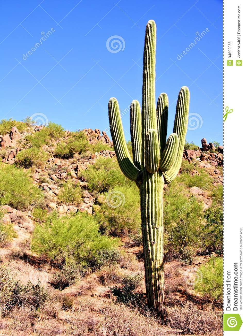 Giant saguaro royalty free stock photo image 34692055 for Cactus imagenes