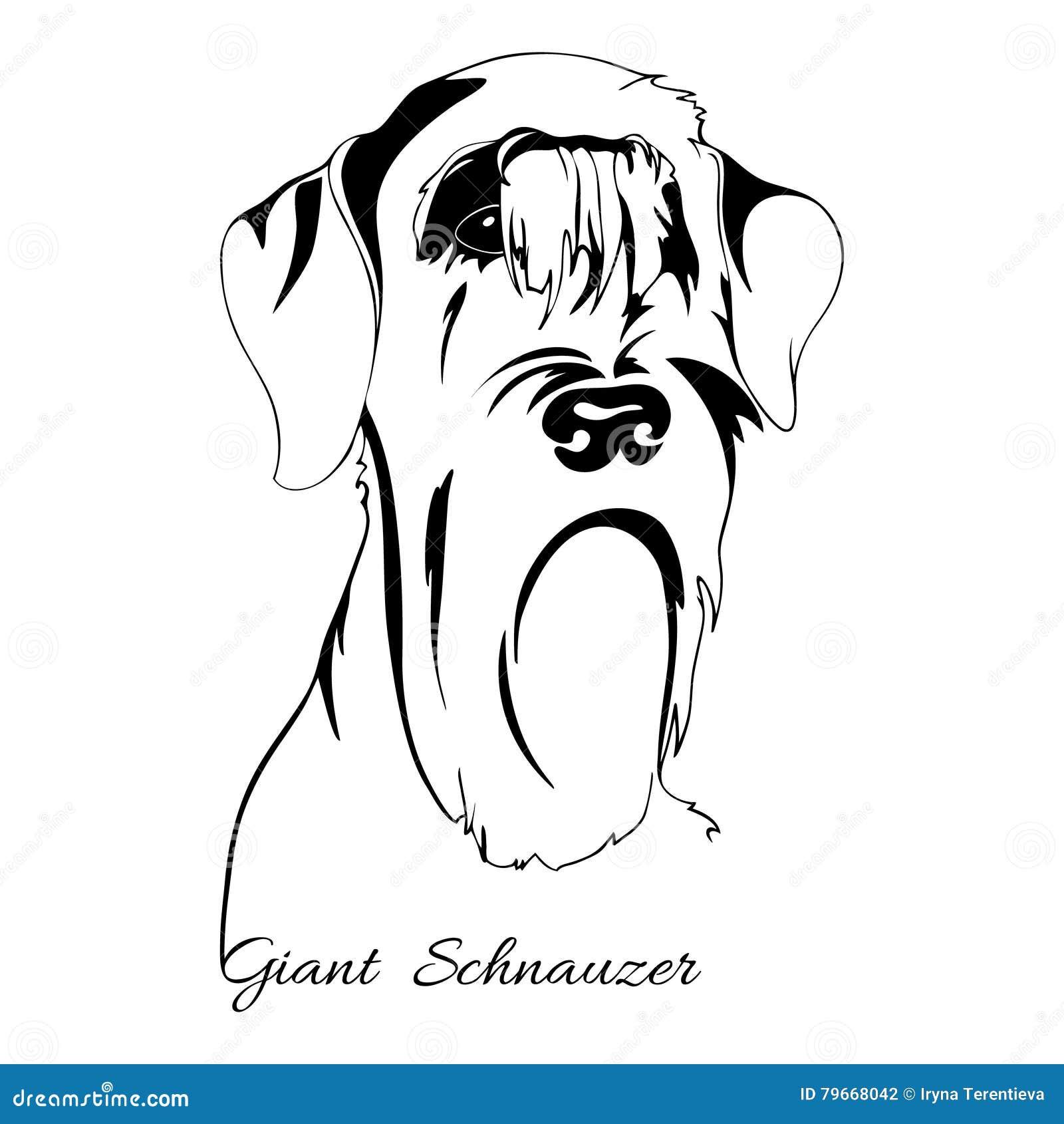 Schnauzer Cartoons, Illustrations & Vector Stock Images