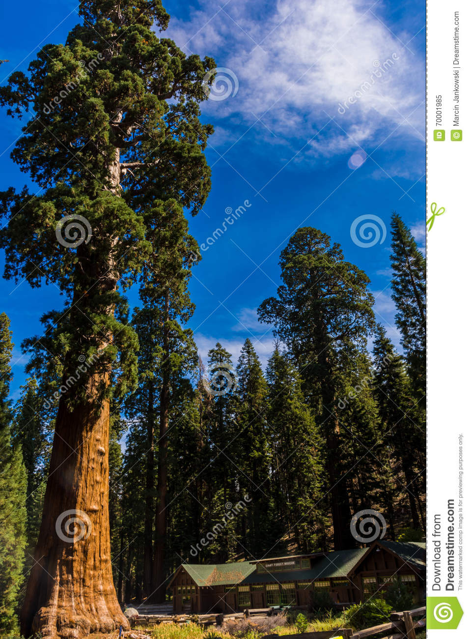 sequoia national park black singles Chatting with black singles in your black singles in monterey - meet african women online step 1 step 2 among many towering trees in sequoia national park.