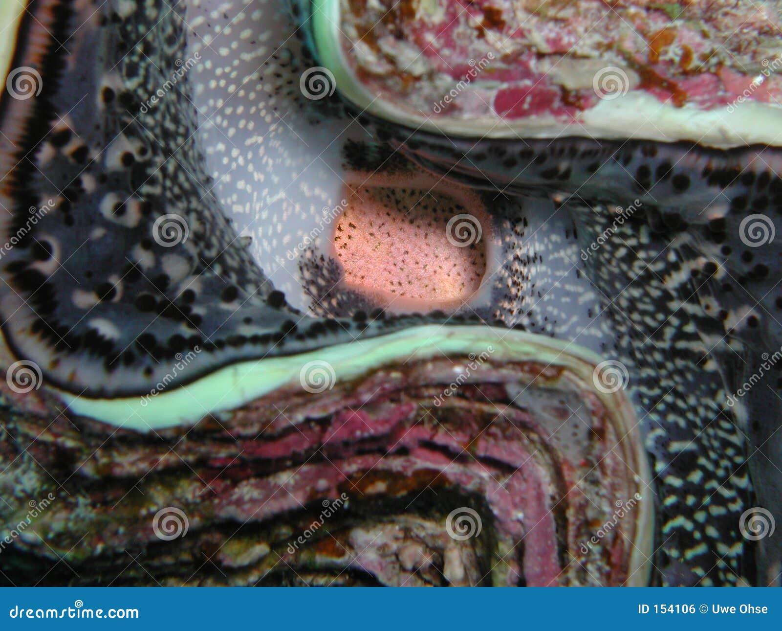 Giant shell closeup