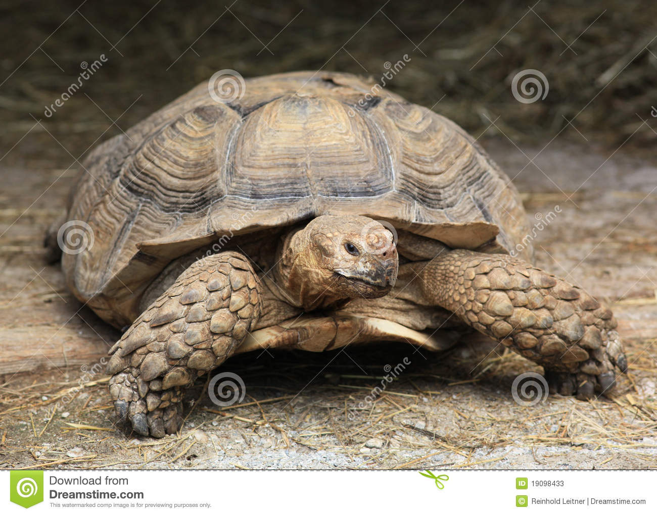 Giant Turtle Stock Photos - Image: 19098433