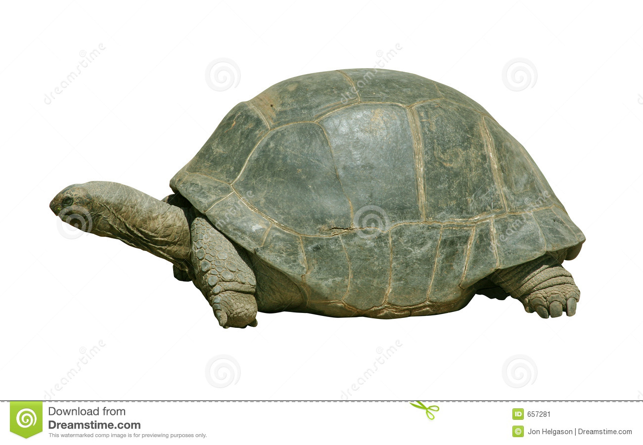 Giant turtle with path