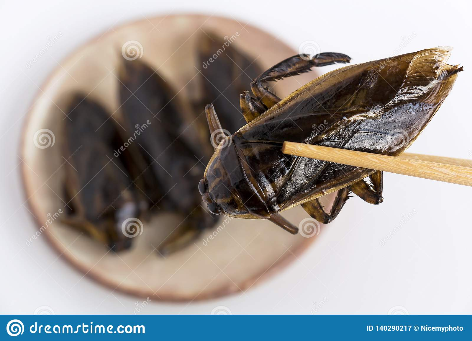 Giant Water Bug is edible insect for eating as food Insects deep-fried crispy snack on plate and chopsticks on white background,