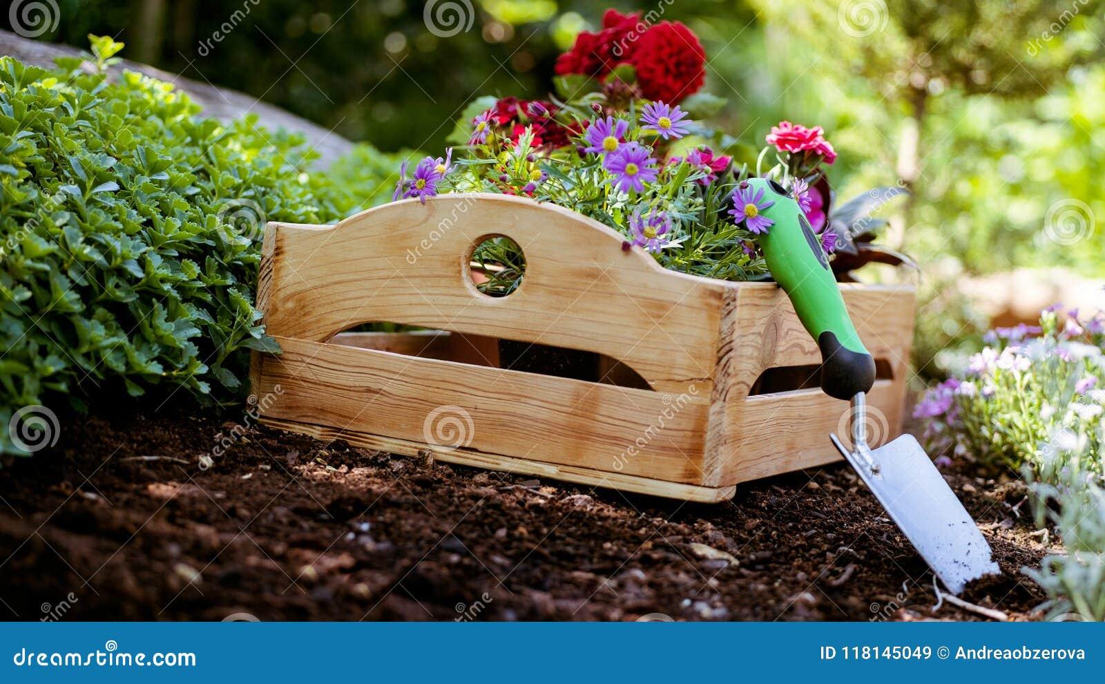 Giardinaggio Strumenti e cassa di giardino in pieno delle piante splendide pronte per la piantatura in Sunny Garden Il giardino d