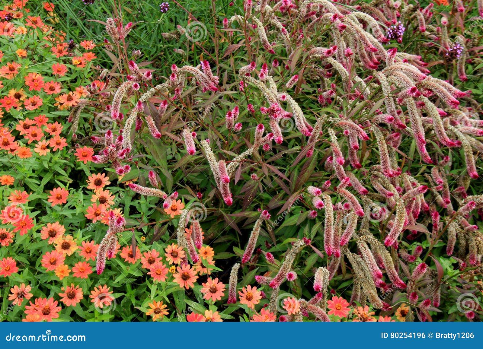 Giardini abbelliti con i fiori e le erbe ornamentali for Giardini ornamentali