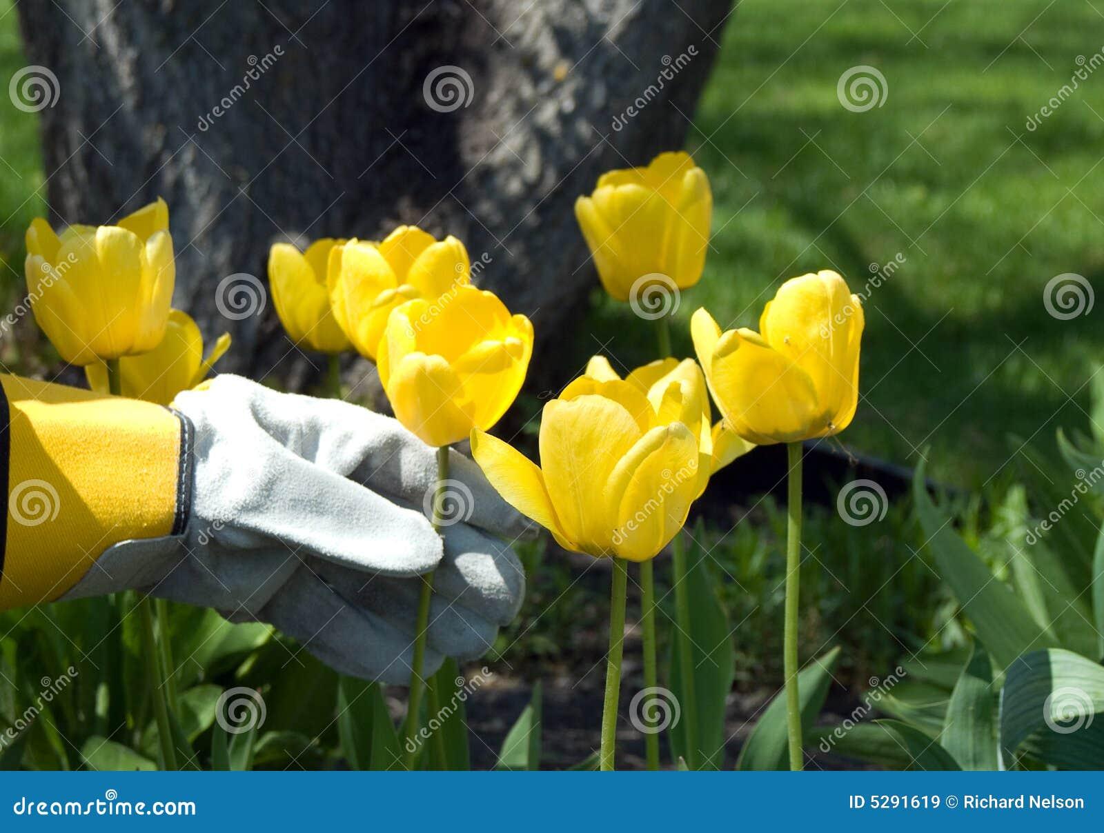 Giardiniere immagine stock immagine di mano giardino for Immagini giardiniere