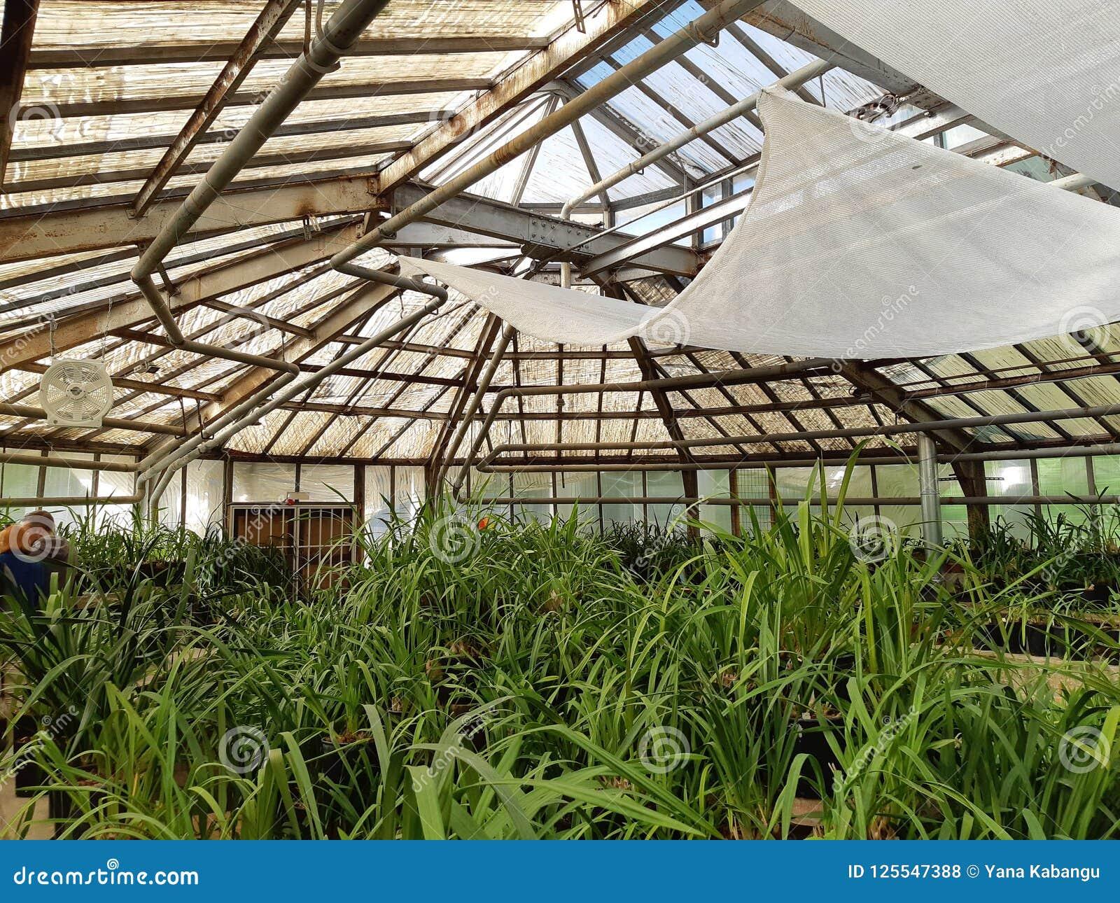 Giardino botanico a Mosca