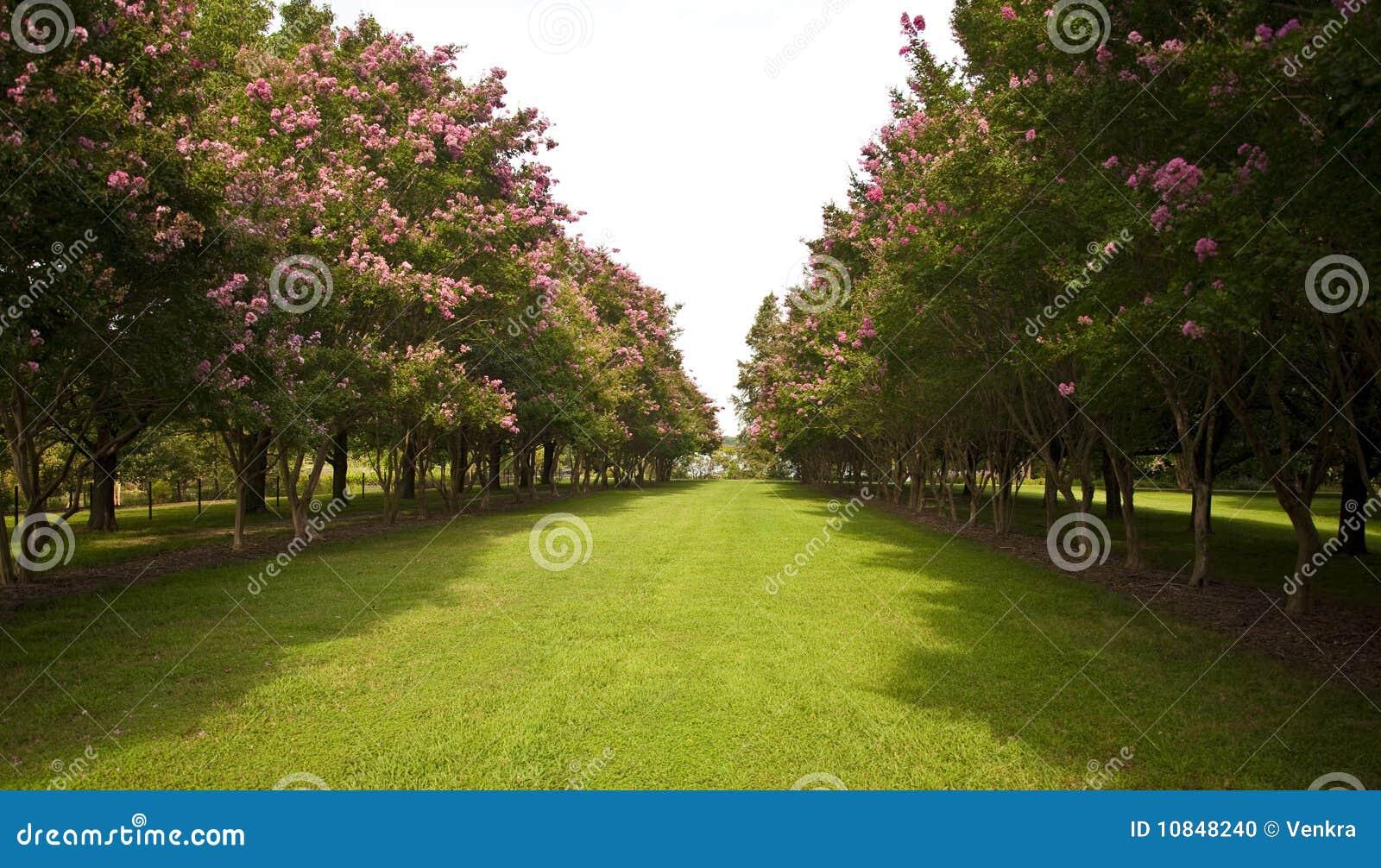 Giardino con gli alberi dai lati fotografia stock immagine 10848240 - Prezzi alberi da giardino ...
