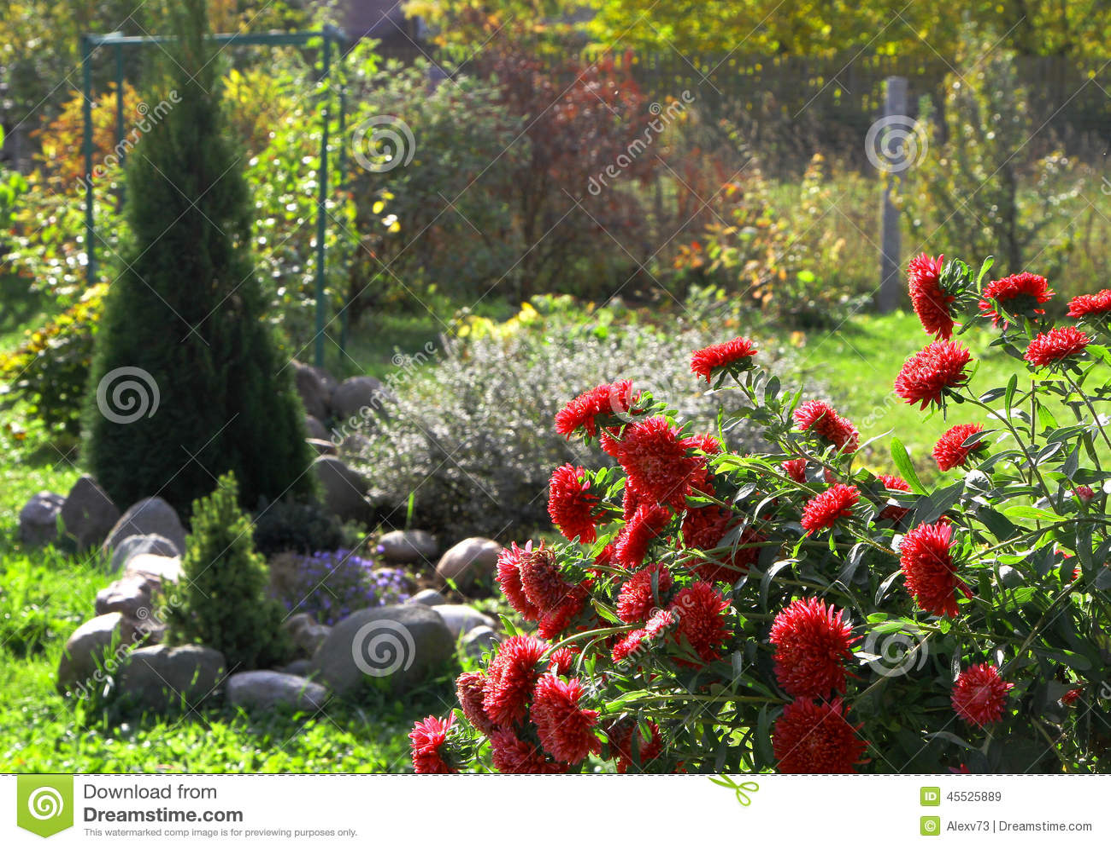 Alberi da giardino con fiori fabulous alberi con rami - Alberi da giardino con fiori ...