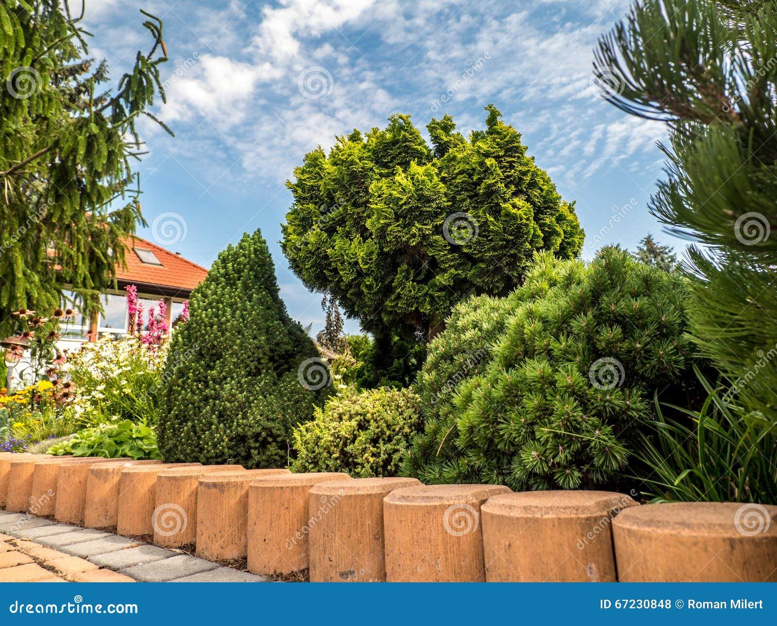 Giardino con il gruppo di piante conifere fotografia stock for Conifere da giardino