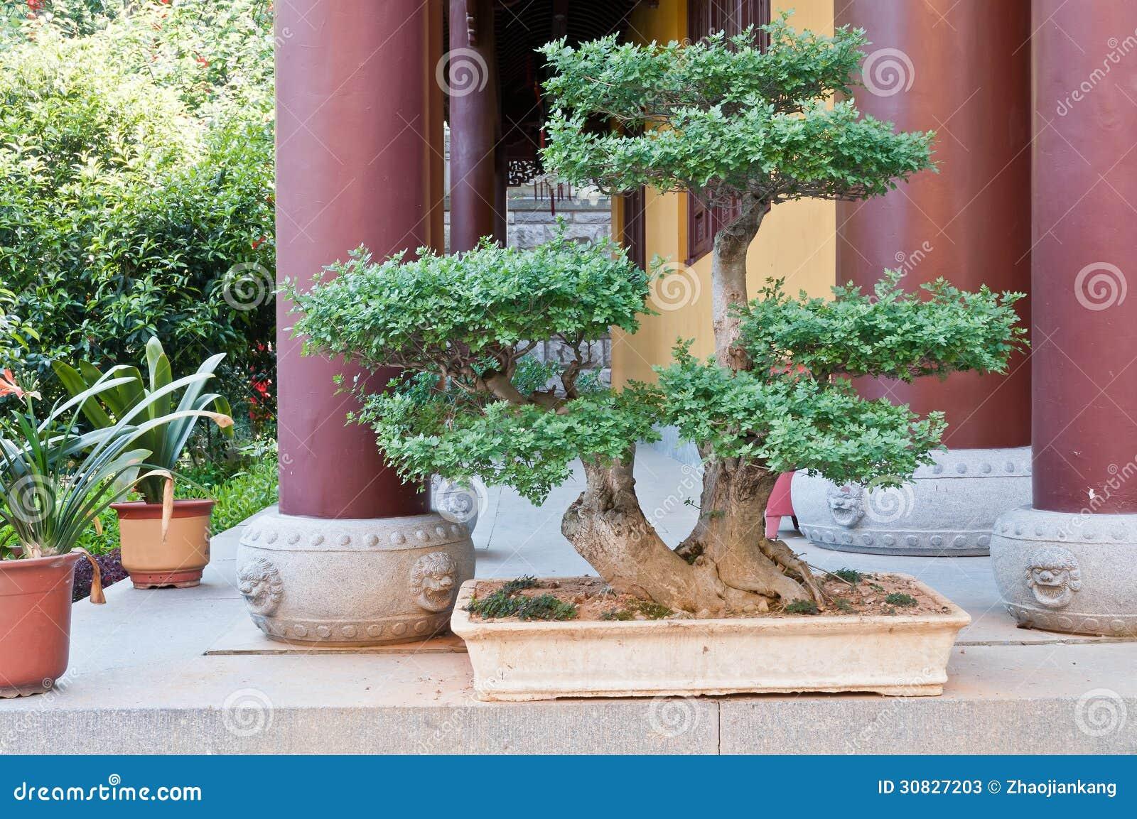 Giardino dei bonsai