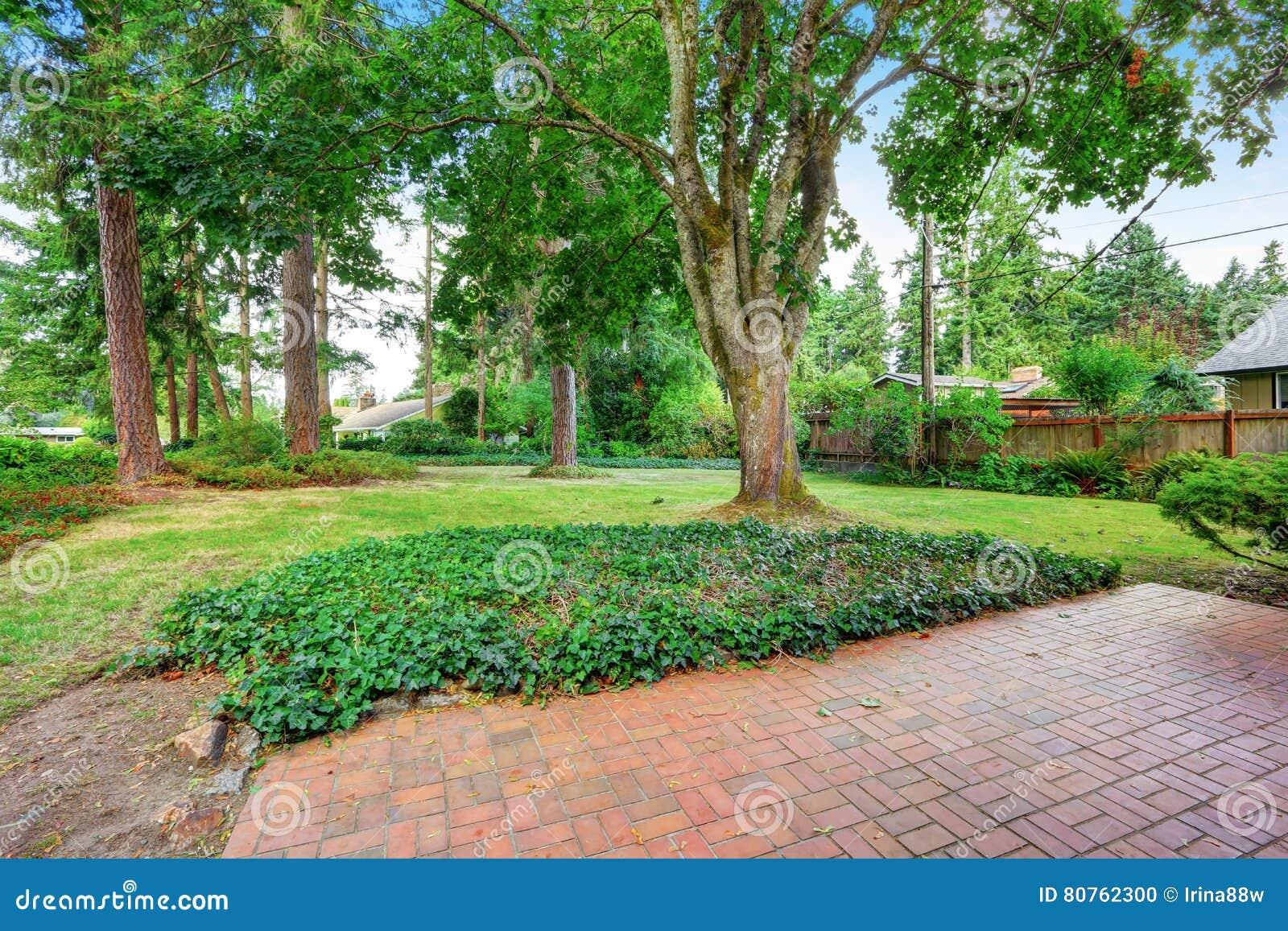 Giardino del cortile con il pavimento gli alberi e l erba del