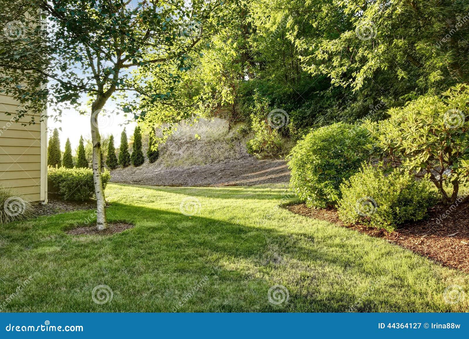 Alberi da giardino betulla for Vivaio alberi da giardino