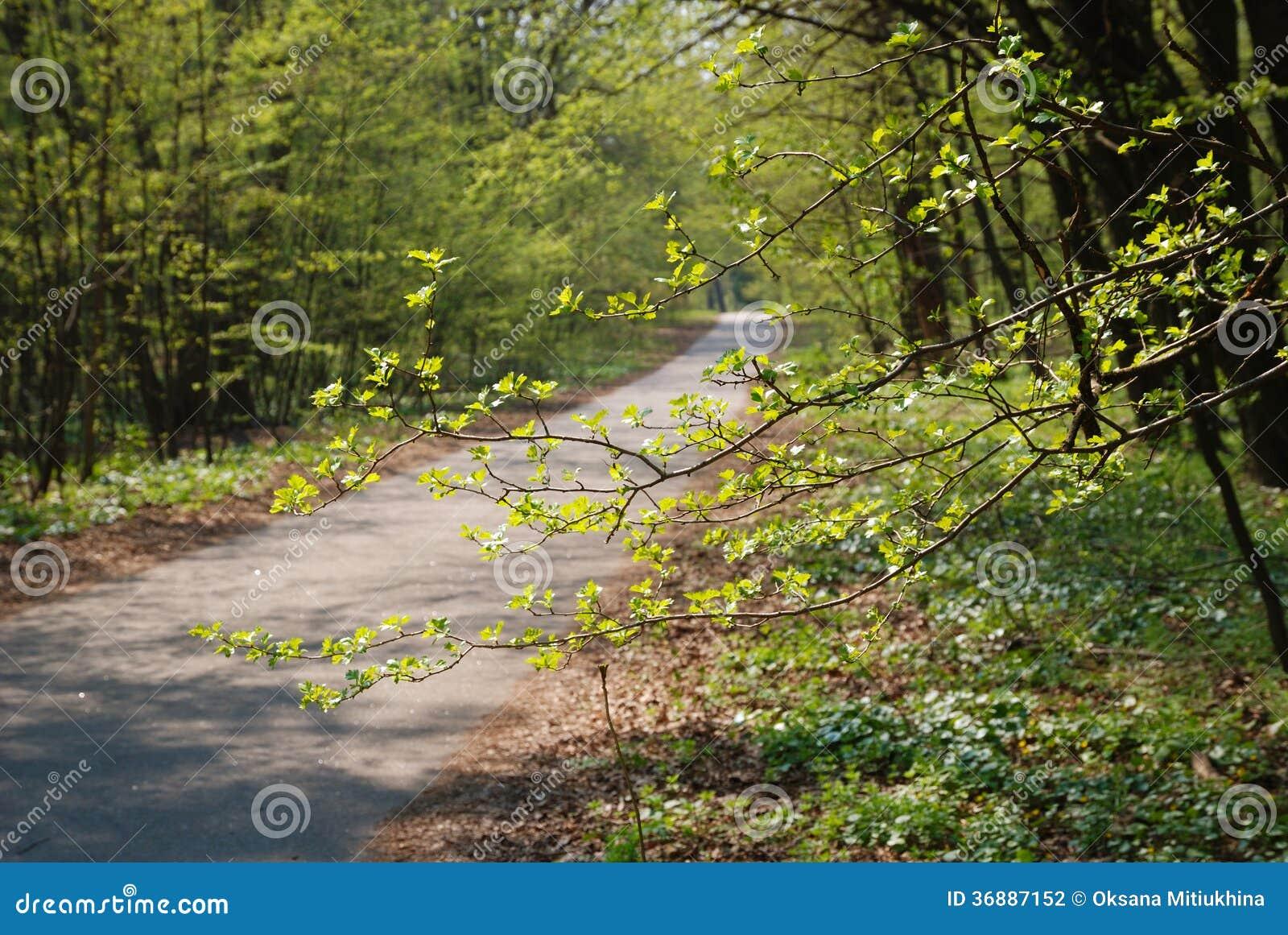 Download Giardino Del Percorso In Primavera Fotografia Stock - Immagine di parco, giardino: 36887152