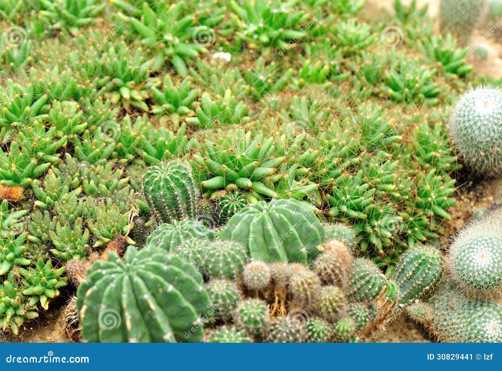 Giardino della pianta del cactus
